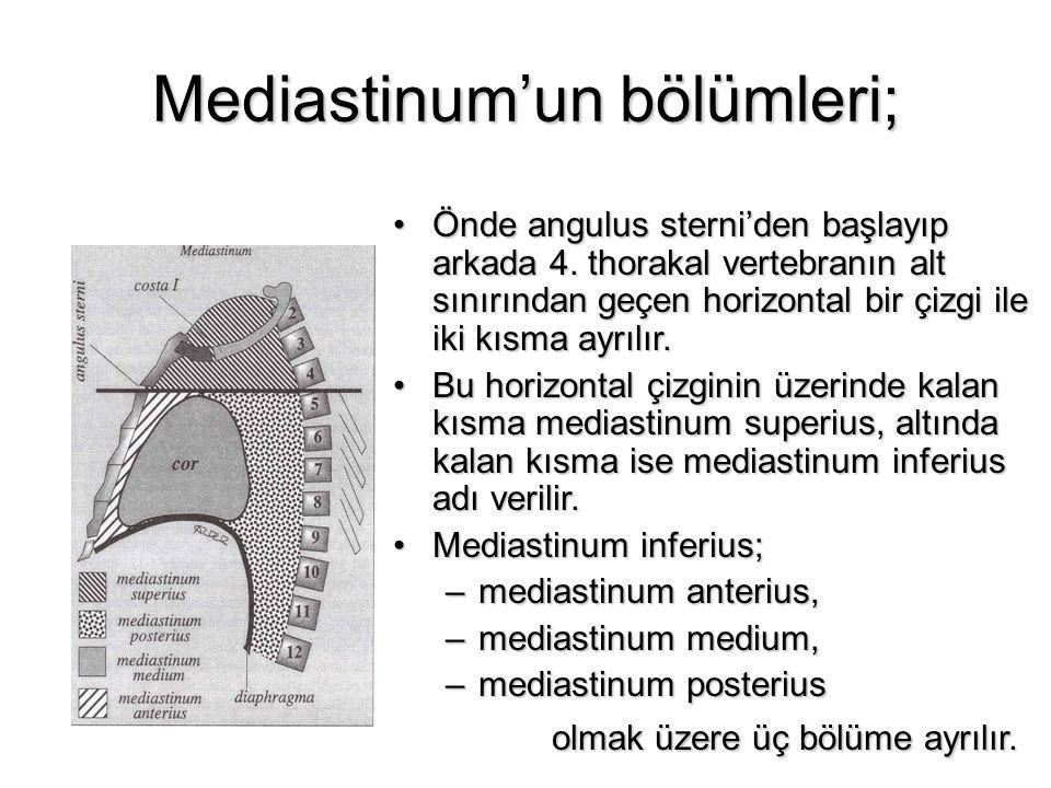Mediastinum'un bölümleri; Önde angulus sterni'den başlayıp arkada 4. thorakal vertebranın alt sınırından geçen horizontal bir çizgi ile iki kısma ayrı