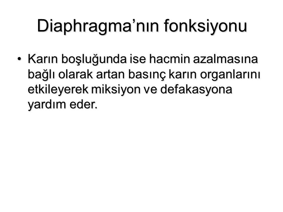 Diaphragma'nın fonksiyonu Karın boşluğunda ise hacmin azalmasına bağlı olarak artan basınç karın organlarını etkileyerek miksiyon ve defakasyona yardı