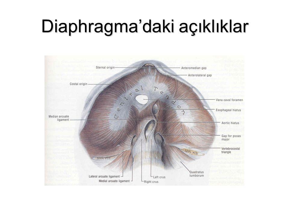 Diaphragma'daki açıklıklar