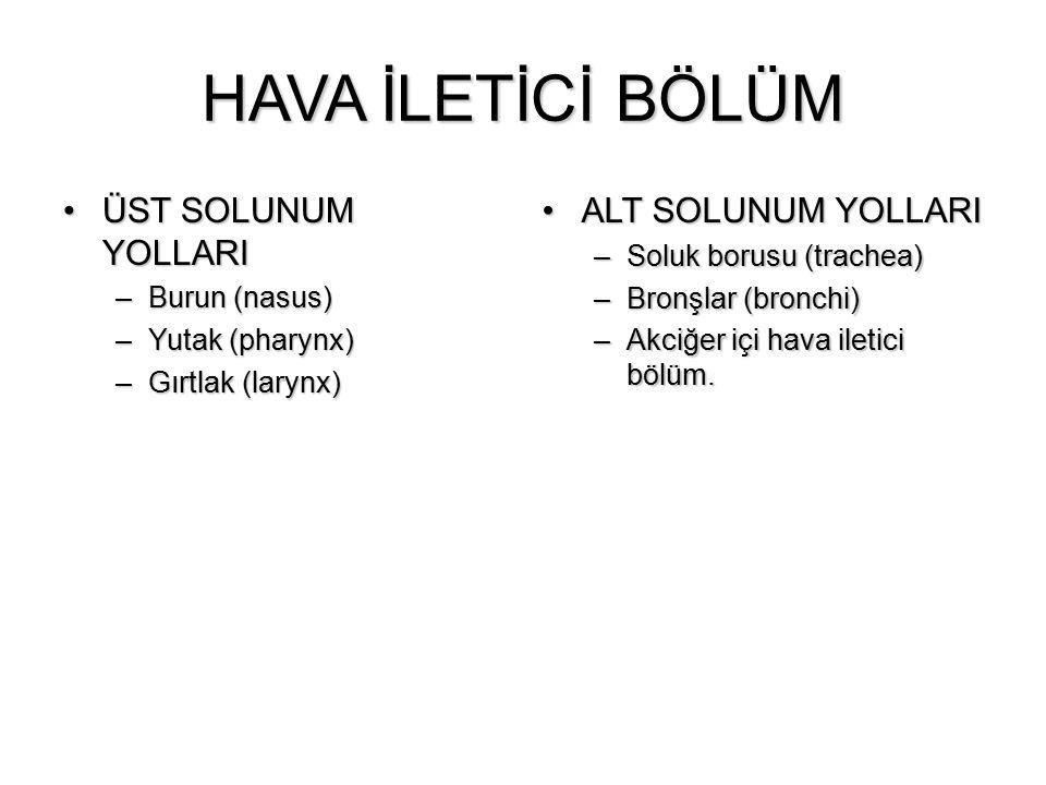 HAVA İLETİCİ BÖLÜM ÜST SOLUNUM YOLLARIÜST SOLUNUM YOLLARI –Burun (nasus) –Yutak (pharynx) –Gırtlak (larynx) ALT SOLUNUM YOLLARIALT SOLUNUM YOLLARI –So