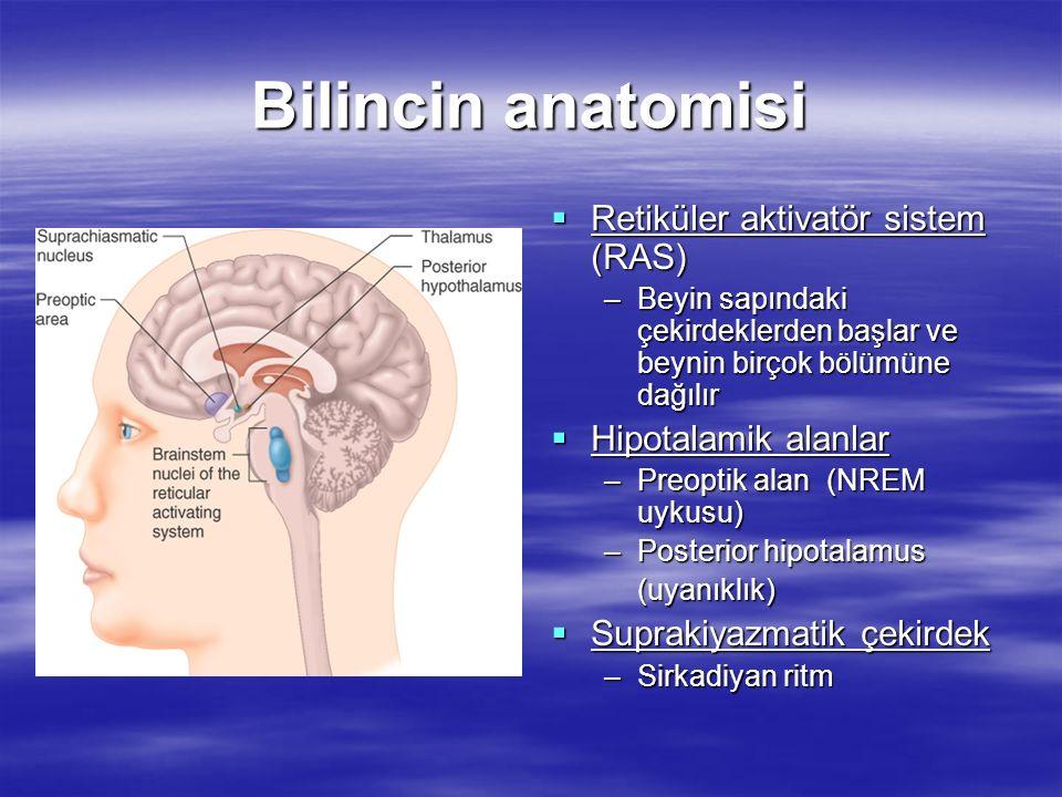  Retiküler aktivatör sistem (RAS) –Beyin sapındaki çekirdeklerden başlar ve beynin birçok bölümüne dağılır  Hipotalamik alanlar –Preoptik alan (NREM