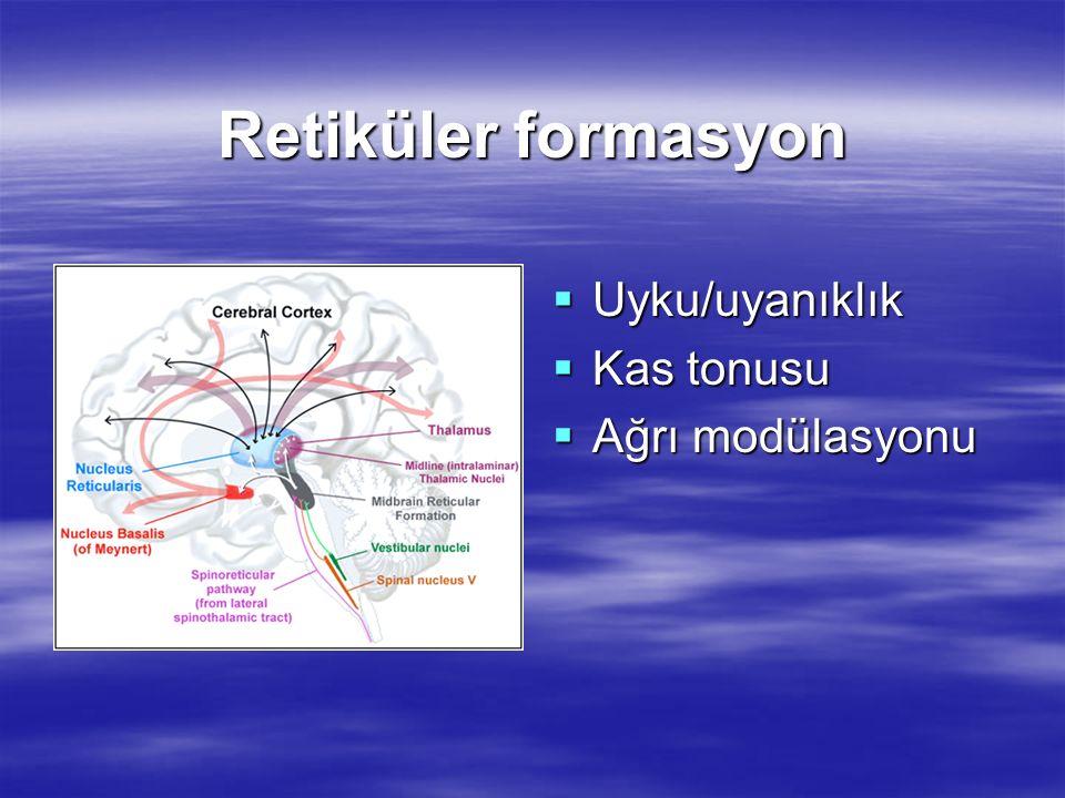 Retiküler formasyon  Uyku/uyanıklık  Kas tonusu  Ağrı modülasyonu