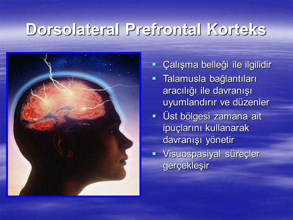 Dorsolateral Prefrontal Korteks  Çalışma belleği ile ilgilidir  Talamusla bağlantıları aracılığı ile davranışı uyumlandırır ve düzenler  Üst bölges