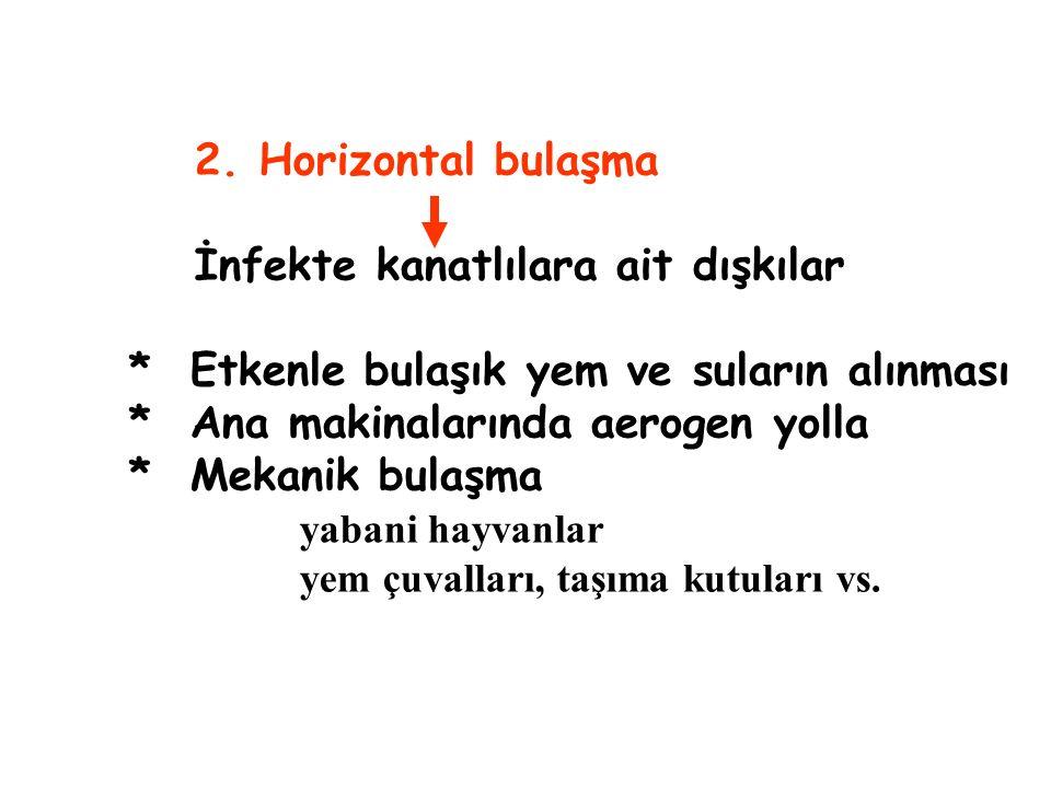 2. Horizontal bulaşma İnfekte kanatlılara ait dışkılar * Etkenle bulaşık yem ve suların alınması * Ana makinalarında aerogen yolla * Mekanik bulaşma y