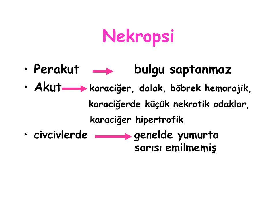Nekropsi Perakutbulgu saptanmaz Akut karaciğer, dalak, böbrek hemorajik, karaciğerde küçük nekrotik odaklar, karaciğer hipertrofik civcivlerdegenelde