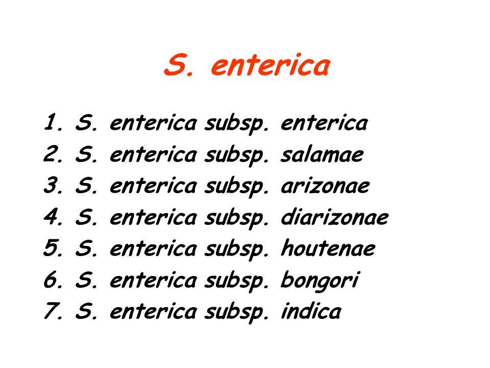 S. enterica 1.S. enterica subsp. enterica 2.S. enterica subsp. salamae 3.S. enterica subsp. arizonae 4.S. enterica subsp. diarizonae 5.S. enterica sub