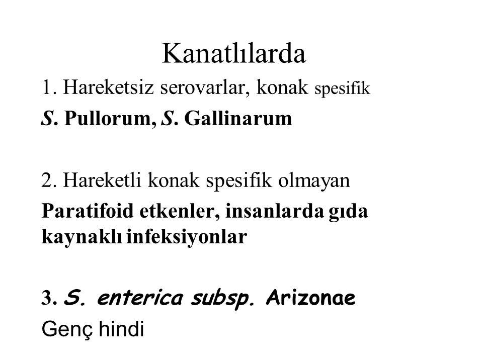 Kanatlılarda 1. Hareketsiz serovarlar, konak spesifik S. Pullorum, S. Gallinarum 2. Hareketli konak spesifik olmayan Paratifoid etkenler, insanlarda g