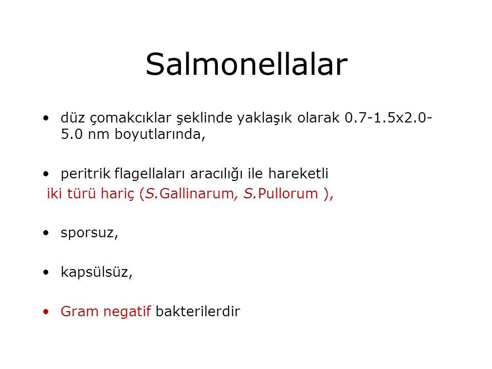 Salmonellalar düz çomakcıklar şeklinde yaklaşık olarak 0.7-1.5x2.0- 5.0 nm boyutlarında, peritrik flagellaları aracılığı ile hareketli iki türü hariç