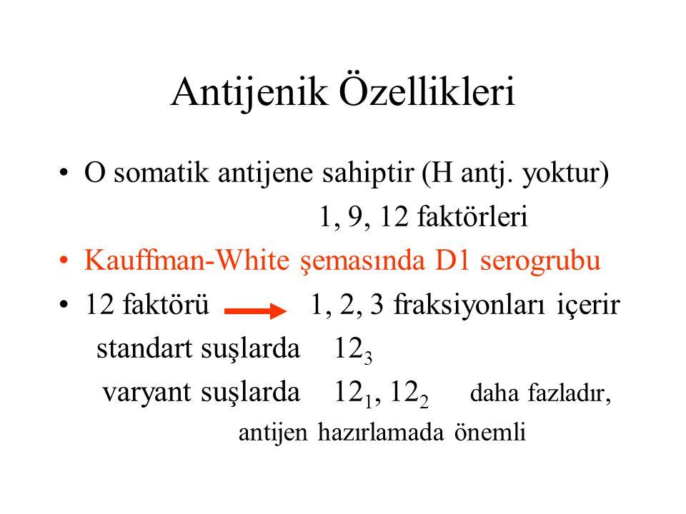 Antijenik Özellikleri O somatik antijene sahiptir (H antj. yoktur) 1, 9, 12 faktörleri Kauffman-White şemasında D1 serogrubu 12 faktörü 1, 2, 3 fraksi