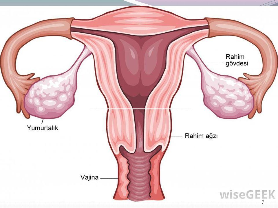 Kadın kanserleri en çok hangi yaşlarda görülür.