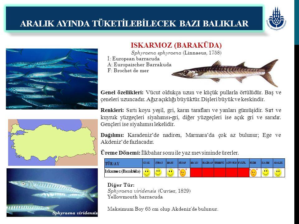 ISKARMOZ (BARAKÜDA) Sphyraena sphyraena (Linnaeus, 1758) İ: European barracuda A: Europaischer Barrakuda F: Brochet de mer Genel özellikleri: Vücut ol