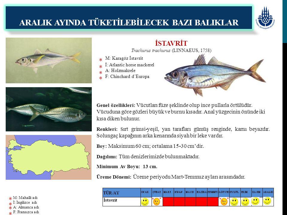 İSTAVRİT Trachurus trachurus (LINNAEUS, 1758) M: Karagöz İstavrit İ: Atlantic horse mackerel A: Holzmakrele F: Chinchard d'Europa ARALIK AYINDA TÜKETİ