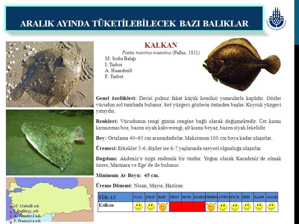 KALKAN Psetta maxima maeotica (Pallas, 1811) M: Sofra Balığı İ: Turbot A: Haandreiß F: Turbot ARALIK AYINDA TÜKETİLEBİLECEK BAZI BALIKLAR Genel özelli
