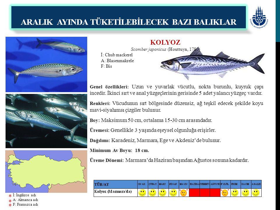 KOLYOZ Scomber japonicus (Houttuyn, 1780) İ: Chub mackerel A: Blasenmakrele F: Bis Genel özellikleri: Uzun ve yuvarlak vücutlu, nokta burunlu, kuyruk
