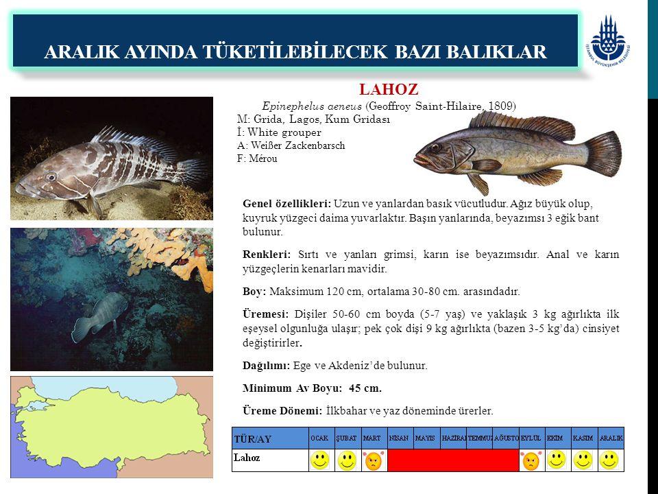 LAHOZ Epinephelus aeneus (Geoffroy Saint-Hilaire, 1809) M: Grida, Lagos, Kum Gridası İ: White grouper A: Weißer Zackenbarsch F: Mérou Genel özellikler