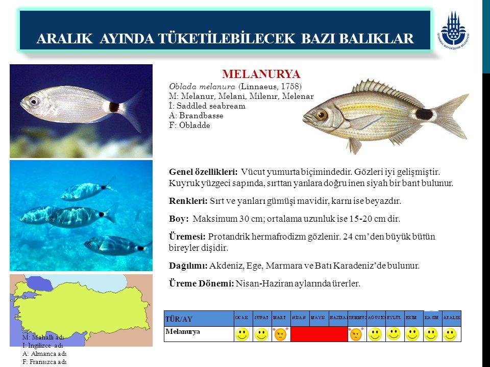 MELANURYA Oblada melanura (Linnaeus, 1758) M: Melanur, Melani, Milenır, Melenar İ: Saddled seabream A: Brandbasse F: Obladde Genel özellikleri: Vücut
