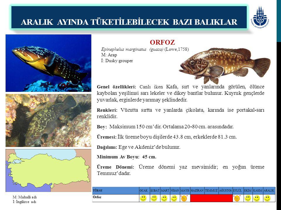 ORFOZ Epinephelus marginatus (guaza) (Lowe,1758) M: Arap İ: Dusky grouper Genel özellikleri: Canlı iken Kafa, sırt ve yanlarında görülen, ölünce kaybo