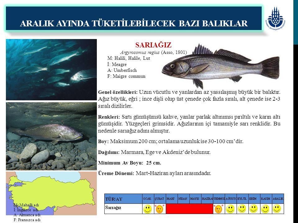 SARIAĞIZ Argyrosomus regius (Asso, 1801) M: Halili, Halile, Lut İ: Meagre A: Umberfisch F: Maigre commun ARALIK AYINDA TÜKETİLEBİLECEK BAZI BALIKLAR G