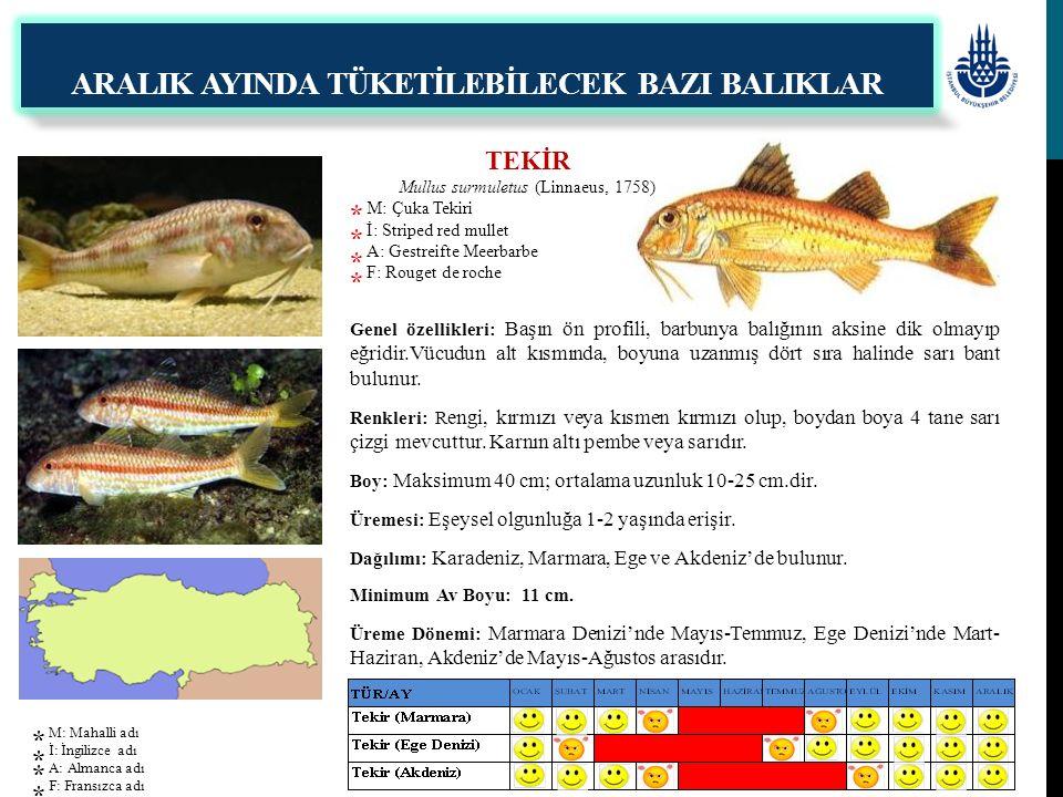 TEKİR Mullus surmuletus (Linnaeus, 1758) M: Çuka Tekiri İ: Striped red mullet A: Gestreifte Meerbarbe F: Rouget de roche Genel özellikleri: Başın ön p