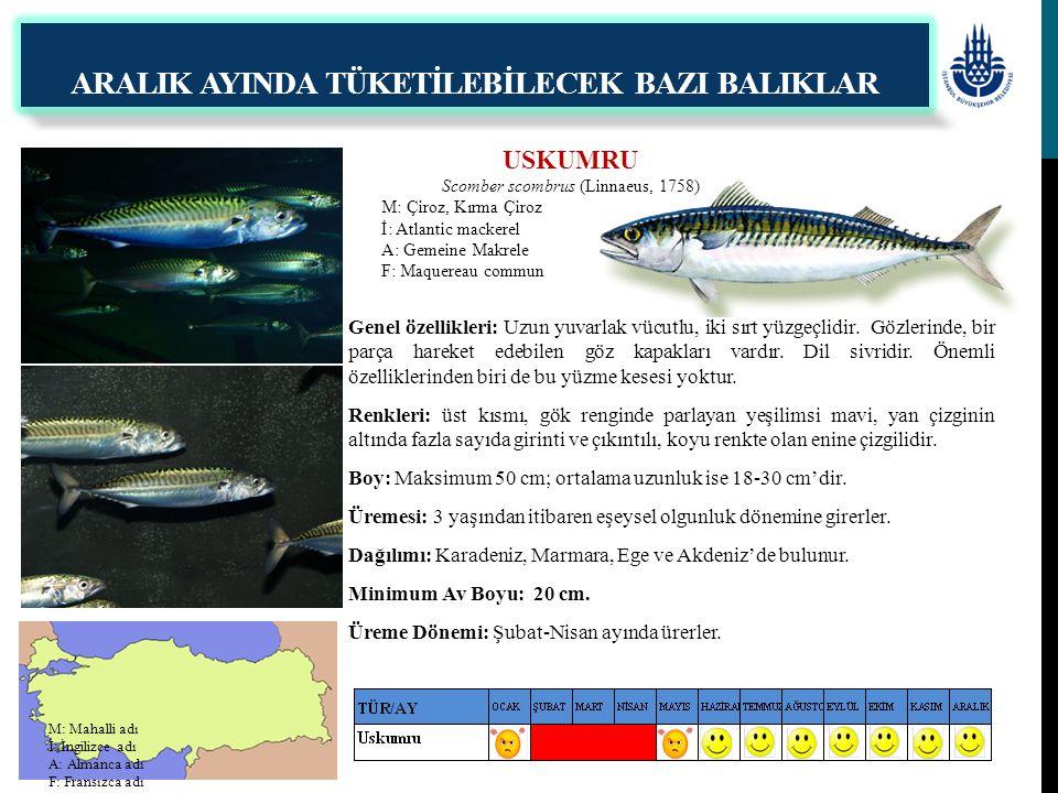 USKUMRU Scomber scombrus (Linnaeus, 1758) M: Çiroz, Kırma Çiroz İ: Atlantic mackerel A: Gemeine Makrele F: Maquereau commun ARALIK AYINDA TÜKETİLEBİLE
