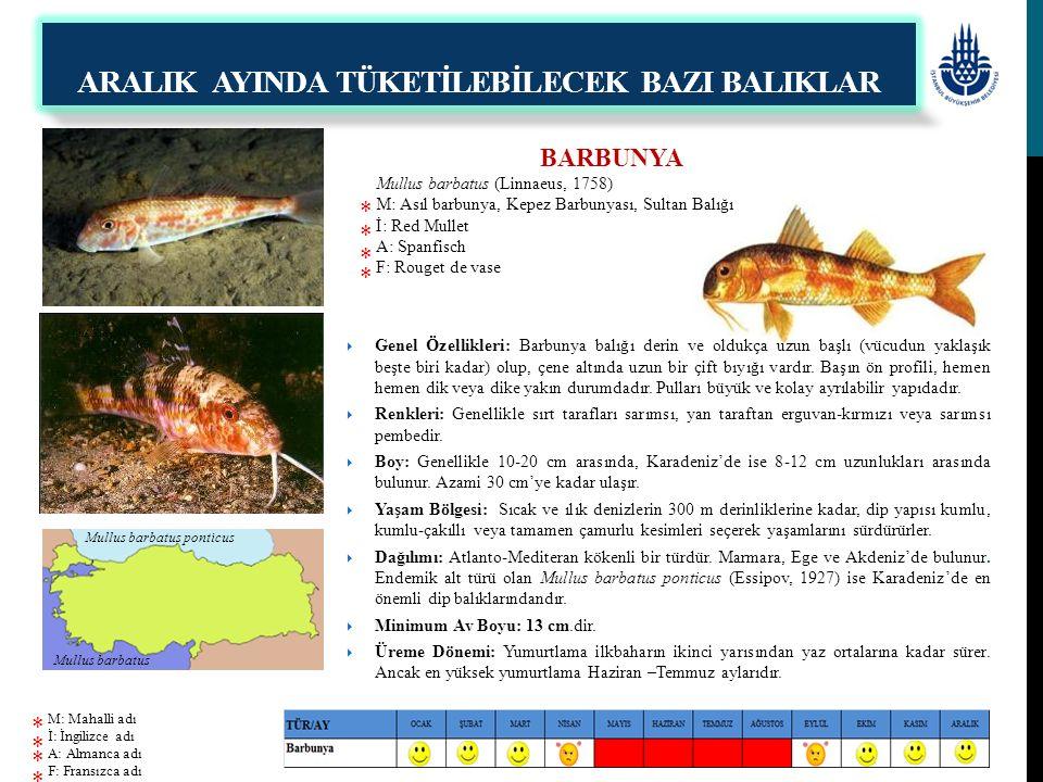 BARBUNYA Mullus barbatus (Linnaeus, 1758) M: Asıl barbunya, Kepez Barbunyası, Sultan Balığı İ: Red Mullet A: Spanfisch F: Rouget de vase  Genel Özell