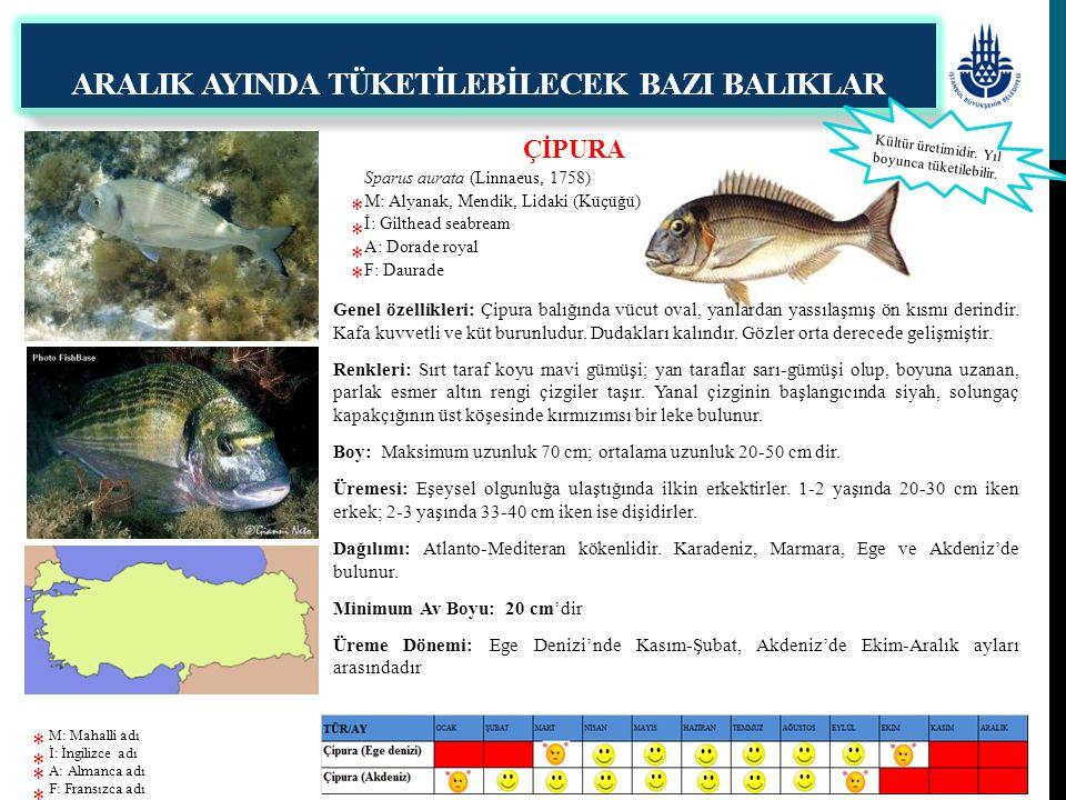 SARIAĞIZ Argyrosomus regius (Asso, 1801) M: Halili, Halile, Lut İ: Meagre A: Umberfisch F: Maigre commun ARALIK AYINDA TÜKETİLEBİLECEK BAZI BALIKLAR Genel özellikleri: Uzun vücutlu ve yanlardan az yassılaşmış büyük bir balıktır.