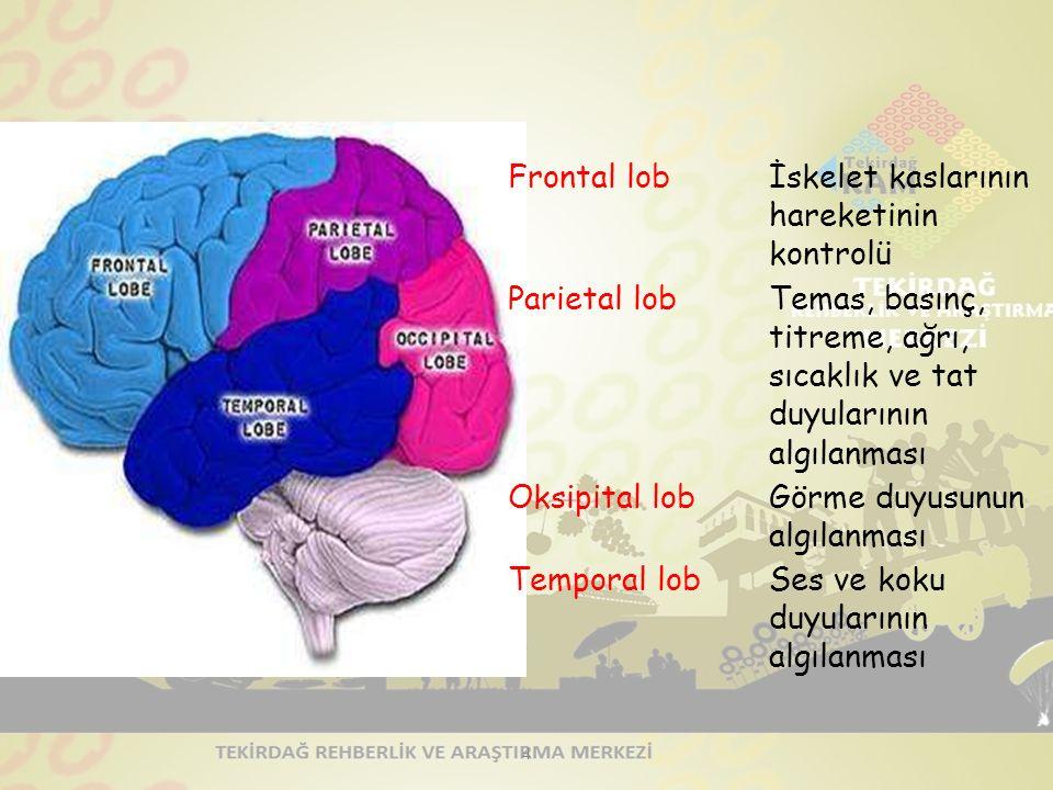 Hafızayı güçlendirmek… Mümkün olduğu kadar çok duyuyu kullanmak: Okuduklarımızın % 10'unu, duyduklarımızın % 20'sini, gördüklerimizin % 30'unu, hem gö