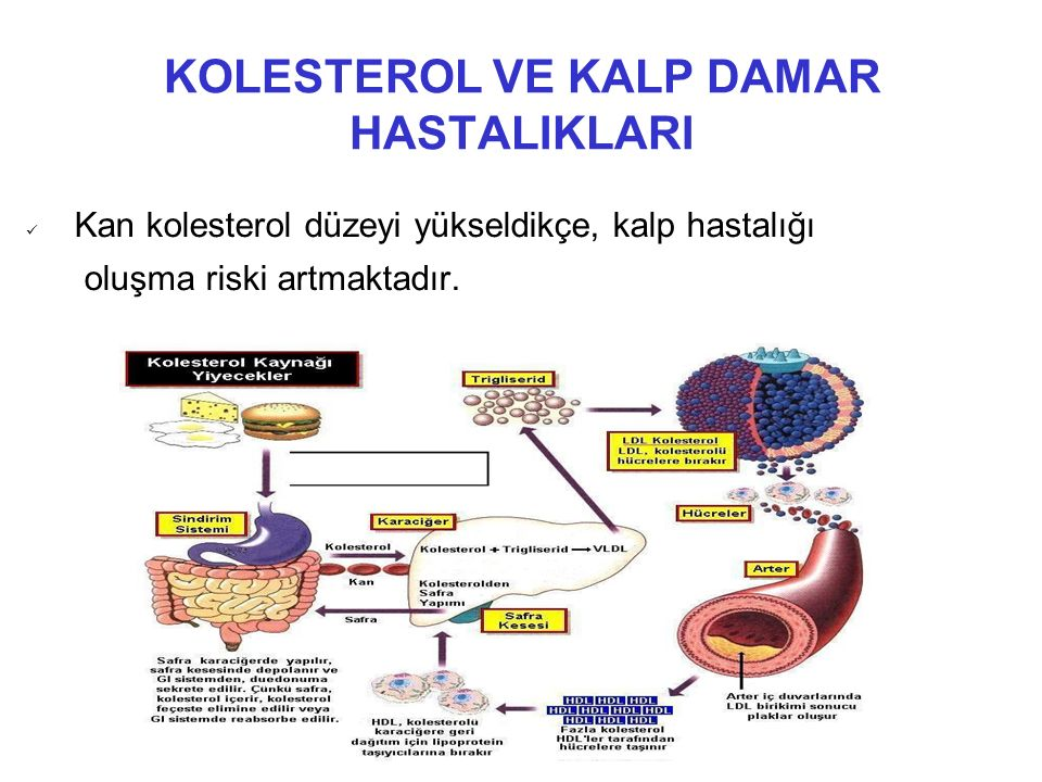 DİYET YAĞLARI VE KAN LİPİTLERİ ÜZERİNE ETKİLERİ Omega-3 yağ asitleri; LDL kolesterol yapımını azaltır.