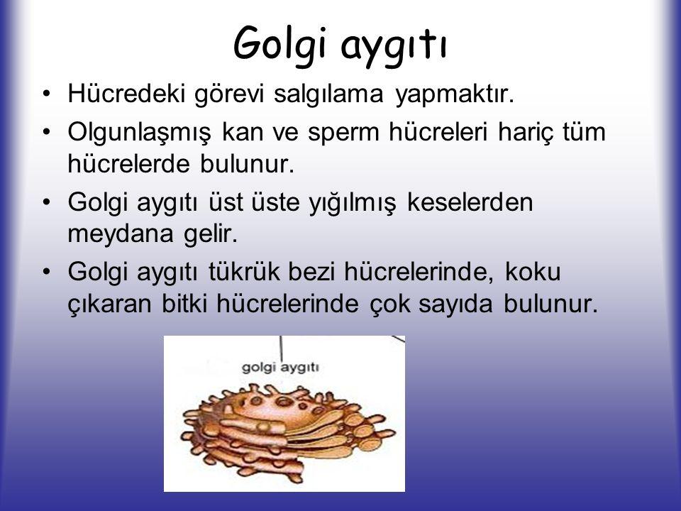 Golgi aygıtı Hücredeki görevi salgılama yapmaktır. Olgunlaşmış kan ve sperm hücreleri hariç tüm hücrelerde bulunur. Golgi aygıtı üst üste yığılmış kes