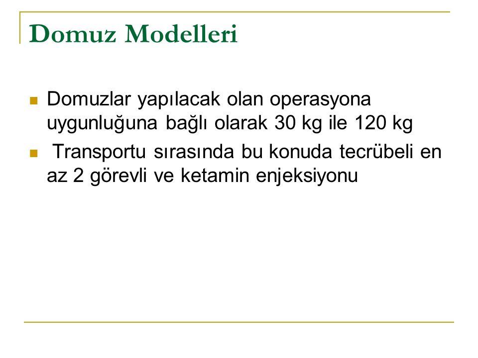Domuz Modelleri Domuzlar yapılacak olan operasyona uygunluğuna bağlı olarak 30 kg ile 120 kg Transportu sırasında bu konuda tecrübeli en az 2 görevli