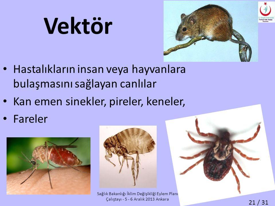 21 / 31 Sağlık Bakanlığı İklim Değişikliği Eylem Planı Çalıştayı - 5 - 6 Aralık 2013 Ankara Vektör Hastalıkların insan veya hayvanlara bulaşmasını sağlayan canlılar Kan emen sinekler, pireler, keneler, Fareler