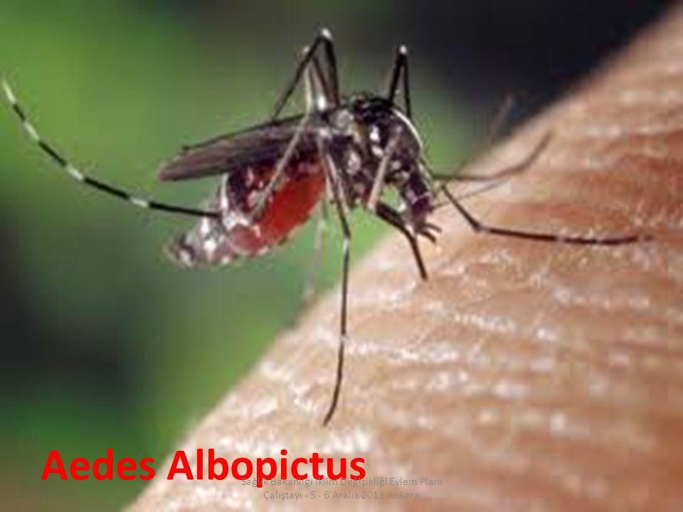 24 / 31 Aedes Albopictus Sağlık Bakanlığı İklim Değişikliği Eylem Planı Çalıştayı - 5 - 6 Aralık 2013 Ankara