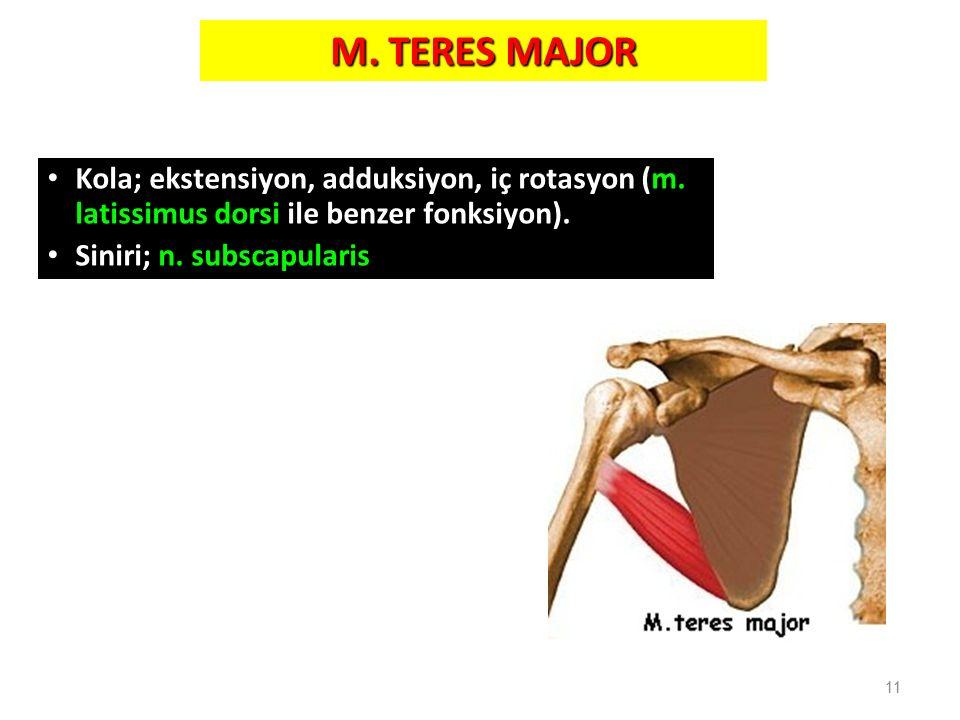M. TERES MAJOR Kola; ekstensiyon, adduksiyon, iç rotasyon (m. latissimus dorsi ile benzer fonksiyon). Siniri; n. subscapularis 11
