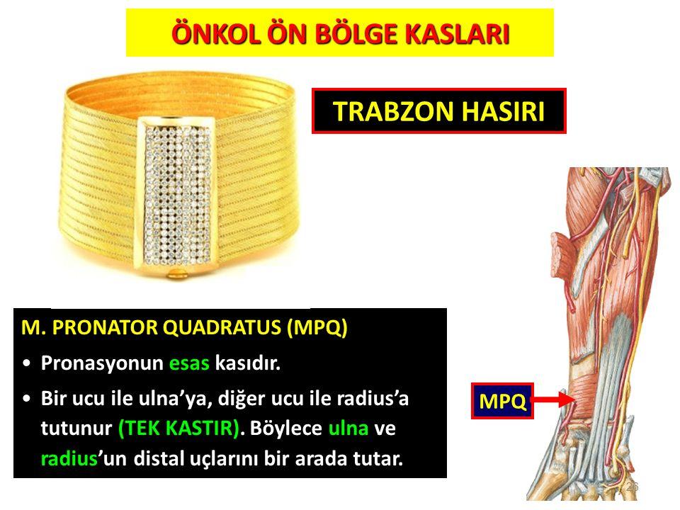 26 MPQ M. PRONATOR QUADRATUS (MPQ) Pronasyonun esas kasıdır. Bir ucu ile ulna'ya, diğer ucu ile radius'a tutunur (TEK KASTIR). Böylece ulna ve radius'