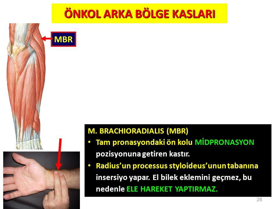 M. BRACHIORADIALIS (MBR) Tam pronasyondaki ön kolu MİDPRONASYON pozisyonuna getiren kastır. Radius'un processus styloideus'unun tabanına insersiyo yap
