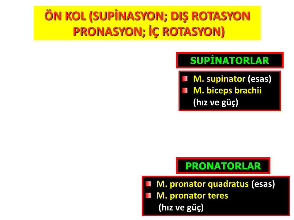 31 ÖN KOL (SUPİNASYON; DIŞ ROTASYON PRONASYON; İÇ ROTASYON) PRONASYON; İÇ ROTASYON) PRONATORLAR SUPİNATORLAR M. supinator (esas) M. biceps brachii (hı