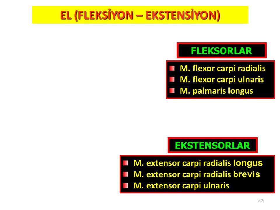 32 EL (FLEKSİYON – EKSTENSİYON) FLEKSORLAR EKSTENSORLAR M. extensor carpi radialis l ongus M. extensor carpi radialis b revis M. extensor carpi ulnari