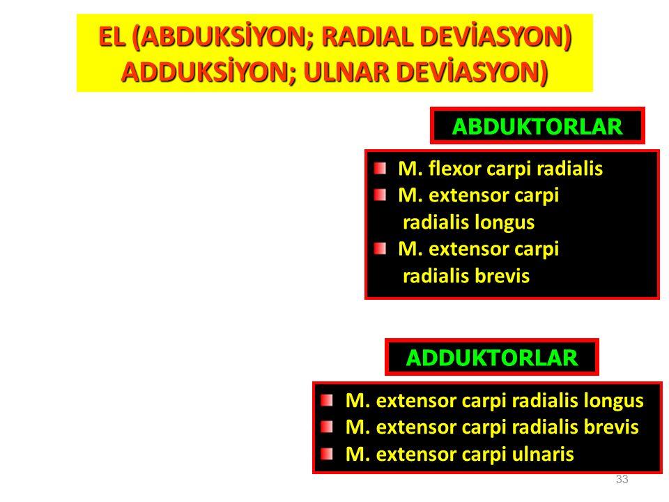 33 EL (ABDUKSİYON; RADIAL DEVİASYON) ADDUKSİYON; ULNAR DEVİASYON) ABDUKTORLAR M. flexor carpi radialis M. extensor carpi radialis longus M. extensor c