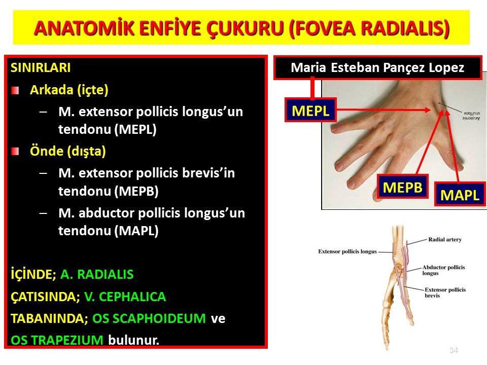 34 ANATOMİK ENFİYE ÇUKURU (FOVEA RADIALIS) 34 SINIRLARI Arkada (içte) –M. extensor pollicis longus'un tendonu (MEPL) Önde (dışta) –M. extensor pollici