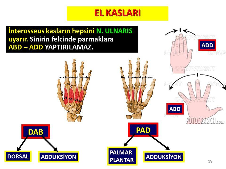 39 ABD ADD İnterosseus kasların hepsini N. ULNARIS uyarır. Sinirin felcinde parmaklara ABD – ADD YAPTIRILAMAZ. PAD DAB PALMAR PLANTAR ADDUKSİYON DORSA