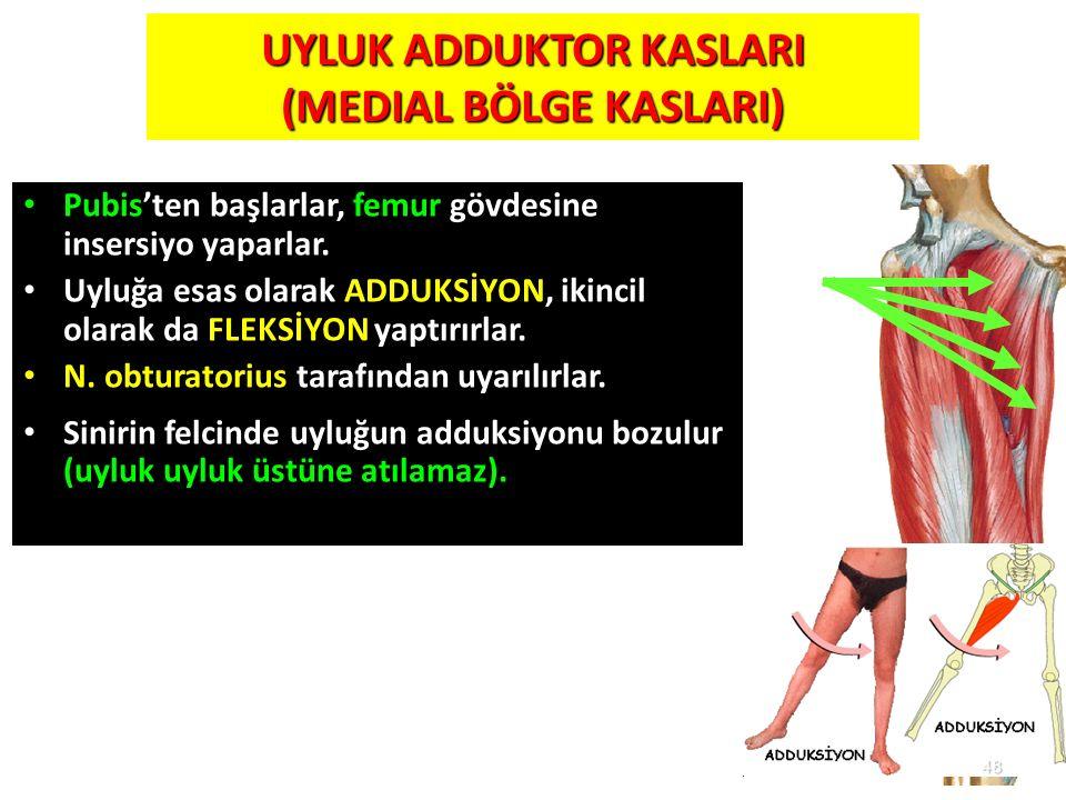 48 UYLUK ADDUKTOR KASLARI (MEDIAL BÖLGE KASLARI) Pubis'ten başlarlar, femur gövdesine insersiyo yaparlar. Uyluğa esas olarak ADDUKSİYON, ikincil olara
