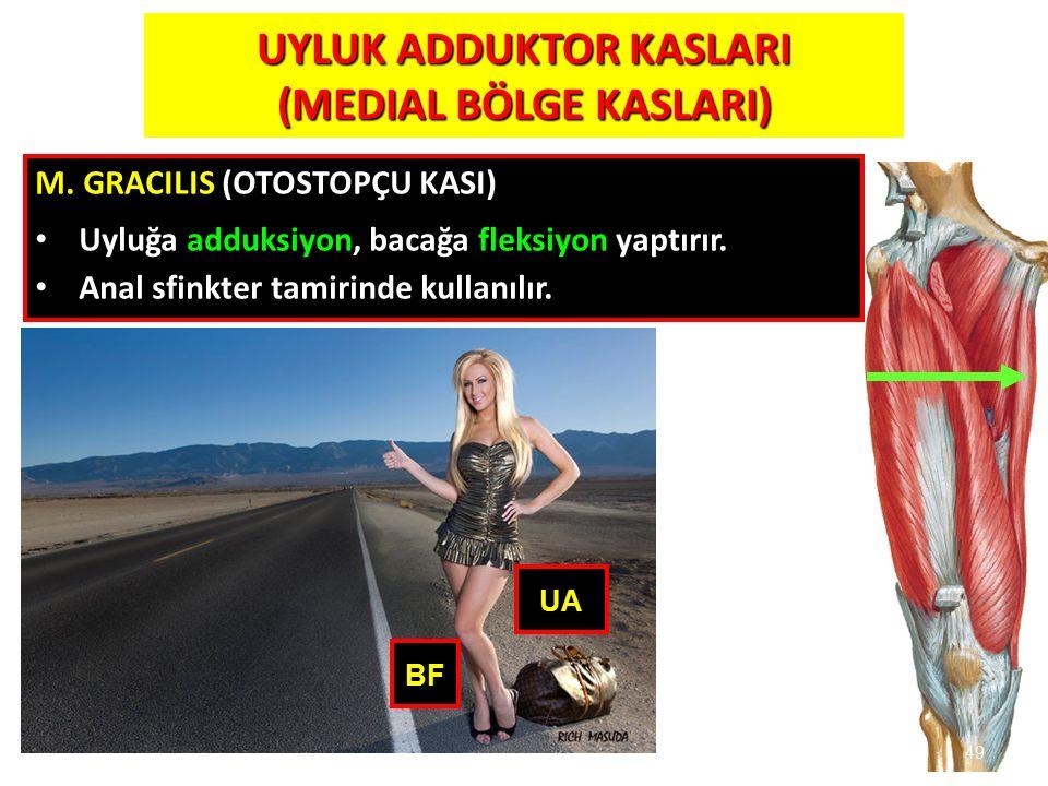 49 49 BF UA UYLUK ADDUKTOR KASLARI (MEDIAL BÖLGE KASLARI) M. GRACILIS (OTOSTOPÇU KASI) Uyluğa adduksiyon, bacağa fleksiyon yaptırır. Anal sfinkter tam