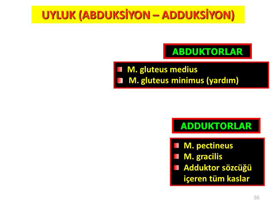 55 UYLUK (ABDUKSİYON – ADDUKSİYON) ABDUKTORLAR M. gluteus medius M. gluteus minimus (yardım) ADDUKTORLAR M. pectineus M. gracilis Adduktor sözcüğü içe