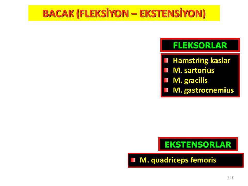 60 BACAK (FLEKSİYON – EKSTENSİYON) FLEKSORLAR EKSTENSORLAR M. quadriceps femoris Hamstring kaslar M. sartorius M. gracilis M. gastrocnemius
