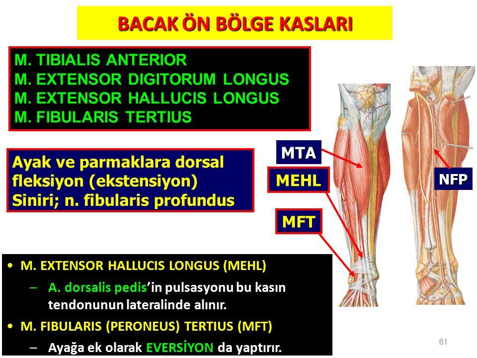 BACAK ÖN BÖLGE KASLARI 61 NFP MTA MEHL MFT M. EXTENSOR HALLUCIS LONGUS (MEHL) –A. dorsalis pedis'in pulsasyonu bu kasın tendonunun lateralinde alınır.