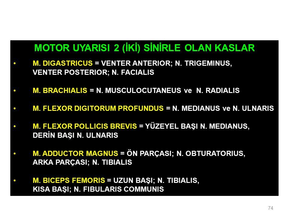 MOTOR UYARISI 2 (İKİ) SİNİRLE OLAN KASLAR M. DIGASTRICUS = VENTER ANTERIOR; N. TRIGEMINUS, VENTER POSTERIOR; N. FACIALIS M. BRACHIALIS = N. MUSCULOCUT
