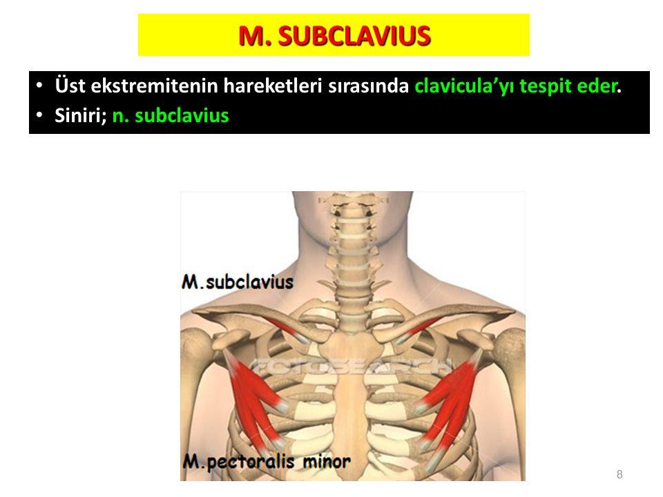 M. SUBCLAVIUS Üst ekstremitenin hareketleri sırasında clavicula'yı tespit eder. Siniri; n. subclavius 8
