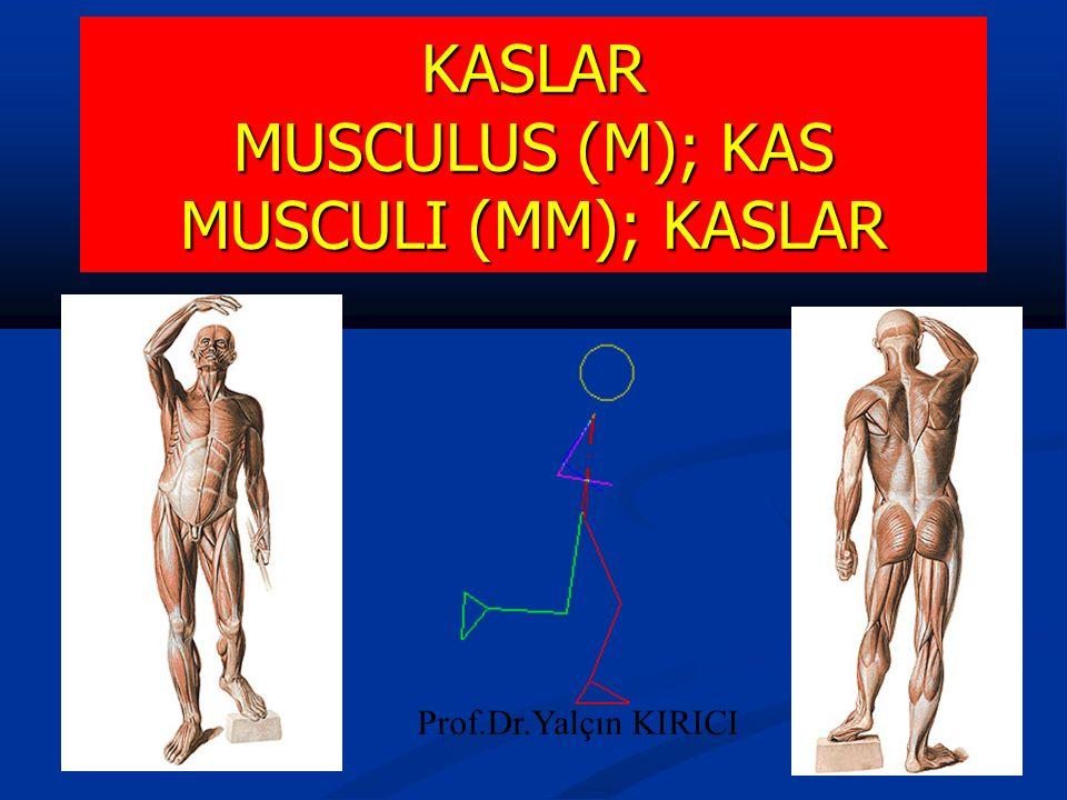 1 KASLAR MUSCULUS (M); KAS MUSCULI (MM); KASLAR Prof.Dr.Yalçın KIRICI