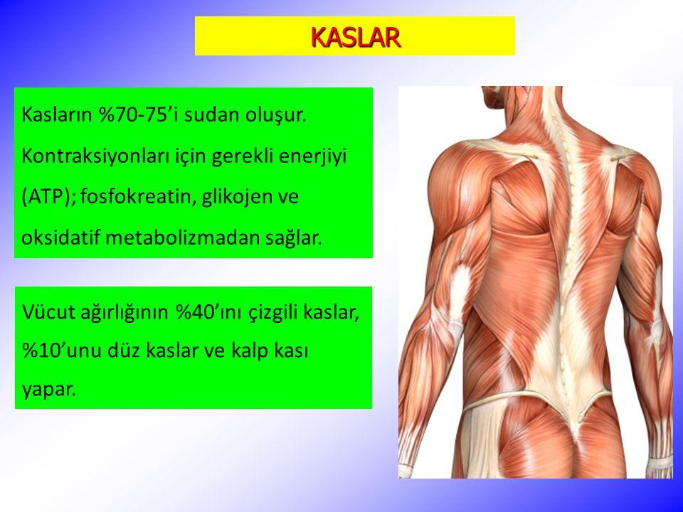KASLAR Vücut ağırlığının %40'ını çizgili kaslar, %10'unu düz kaslar ve kalp kası yapar. Kasların %70-75'i sudan oluşur. Kontraksiyonları için gerekli
