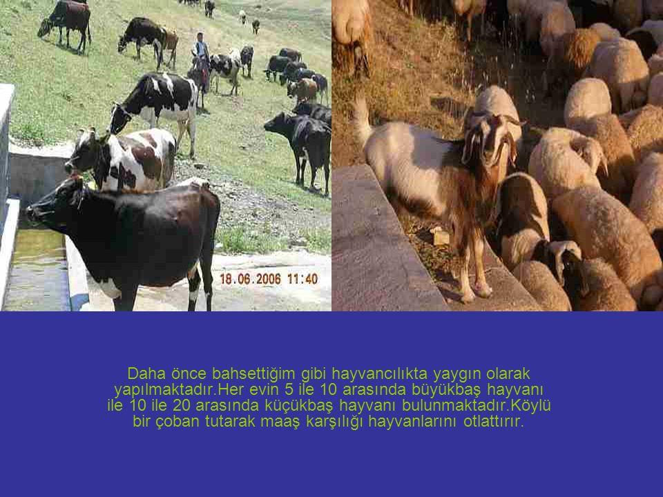 Daha önce bahsettiğim gibi hayvancılıkta yaygın olarak yapılmaktadır.Her evin 5 ile 10 arasında büyükbaş hayvanı ile 10 ile 20 arasında küçükbaş hayva